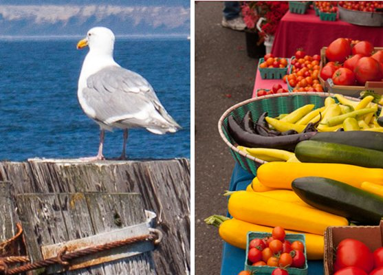 Gull and Port Townsend Farmers Market